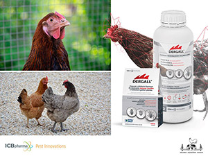 Graphics to post about World and Russian Poultry Breeding Development Trends